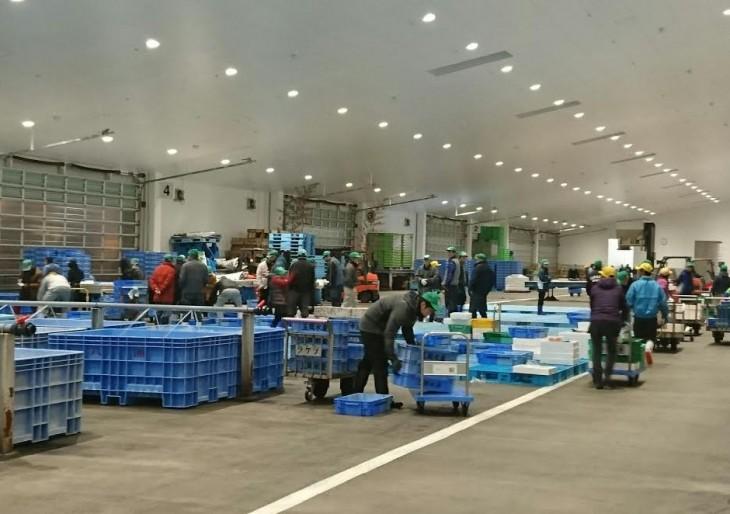 魚市場・セリ